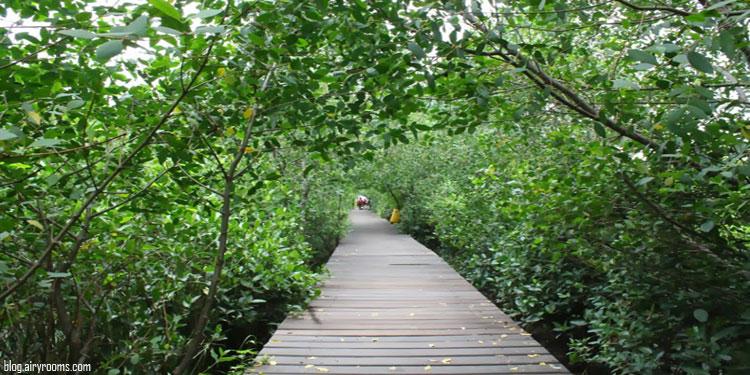 Pertama di Indonesia, Surabaya Bakal Punya Kebun Raya Mangrove