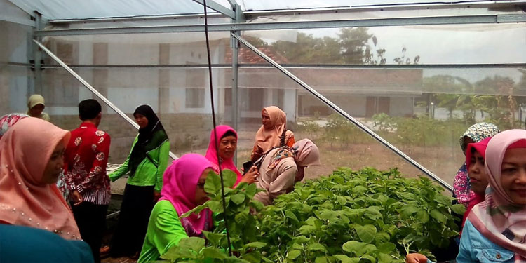 Rampak Sarinah Gerakkan Ibu-ibu Tulungagung Hijaukan Lingkungan dengan Urban Farming