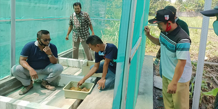 Upaya Hanum Menjadikan Sidoharjo jadi Pusat Budidaya Maggot BSF di Kabupaten Mojokerto